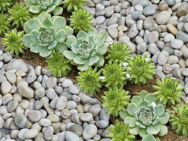 Garden Gravels